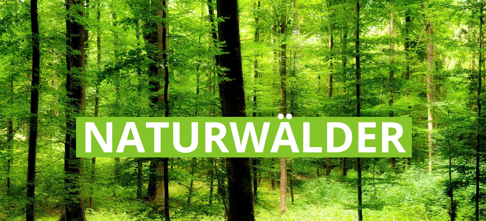 Naturwälder